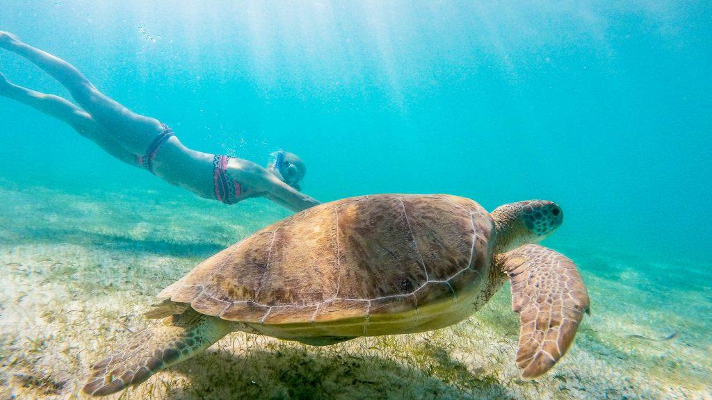 Bonaire | Isla penthouse & garden apartments